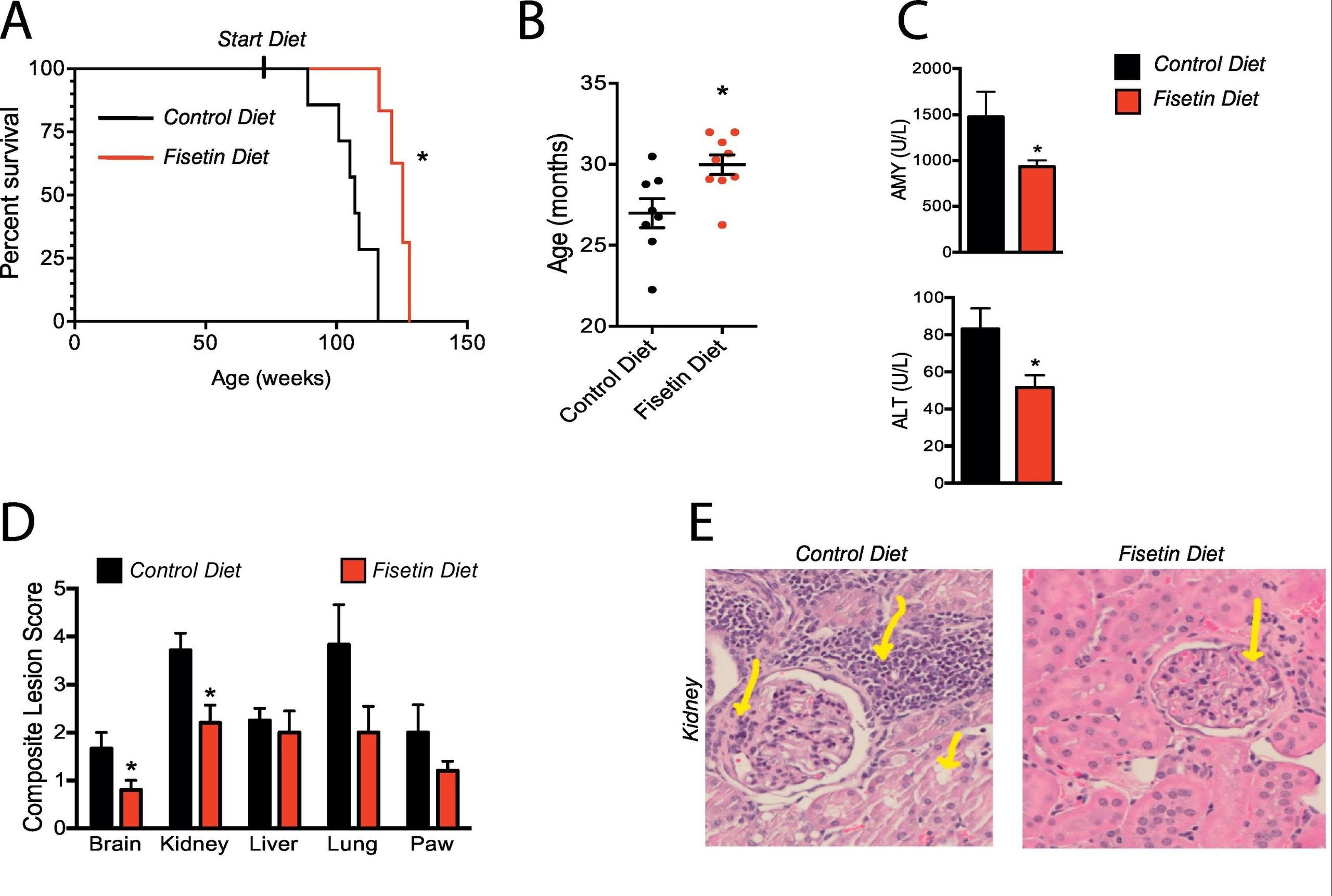 Late-life intervention with fisetin in aged wild-type mice extends health span and lifespan. Source: 10.1016/j.ebiom.2018.09.015
