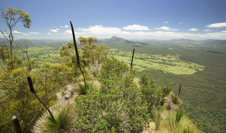 Border Ranges National Park, Australia. © State of New South Wales and Office of Environment and Heritage.