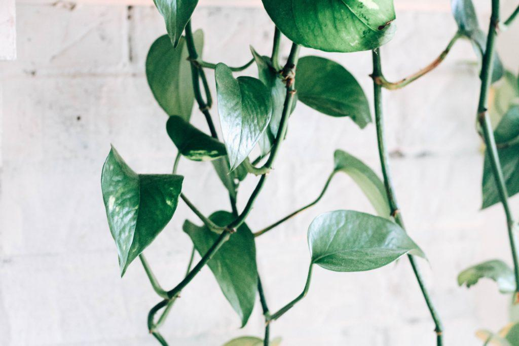 House plants can improve air quality and reduce stress. Photo by Kara Eads on Unsplash.