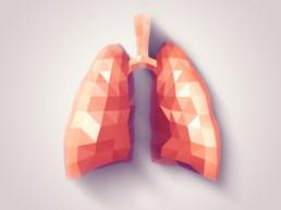 Illustration of human lungs with faceted low-poly geometry effect. Credit: eranicle.